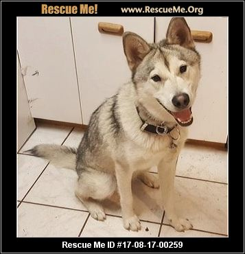 connecticut dog rescue � adoptions � rescuemeorg