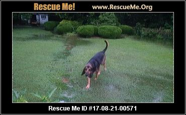 Salisbury Maryland Dog Rescue