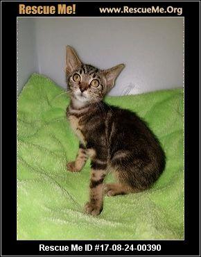 Crazy Cat Animal Rescue Cincinnati Ohio