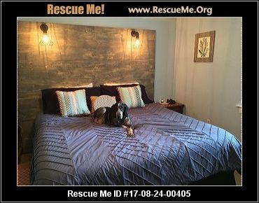 Florida Bluetick Coonhound Rescue ― ADOPTIONS ― RescueMe.Org