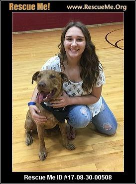 Tarrant County Dog Adoption
