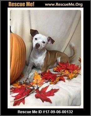 Fur Ever Paws Dog Rescue Smyrna Ny