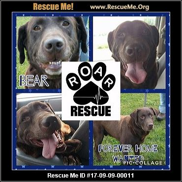 St Clair County Dog Rescue