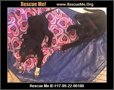 Petsmart Dog Adoptions Mesa Az
