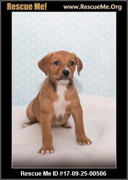 Safe Haven Dog Rescue South Elgin