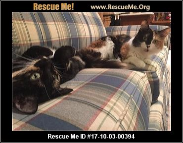 Maine coon kittens raleigh nc