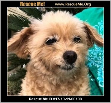 maltese rescue california california maltese rescue adoptions rescueme org 691
