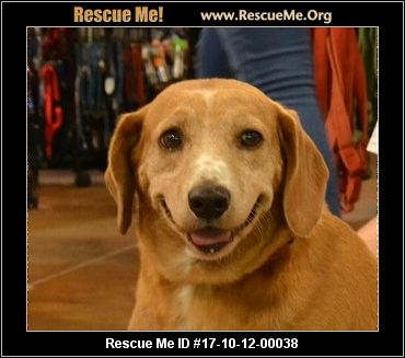 Raleigh Nc Small Dog Rescue
