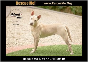 Howard County Animal Shelter Dogs For Adoption