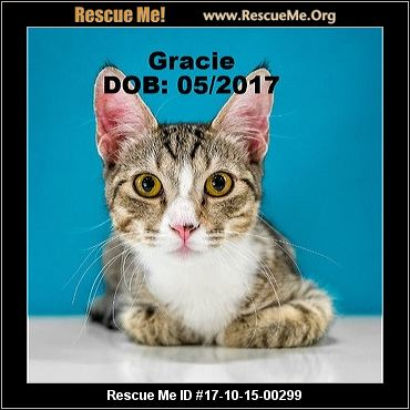 What Needs To Be Done Before Adopting Cat