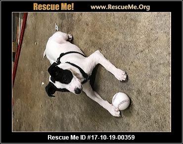 Bristol Tn Dog Rescue