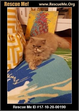 Fiv Cat Rescue Florida