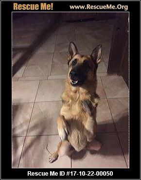 Texas German Shepherd Rescue ― Adoptions ― Rescueme Org
