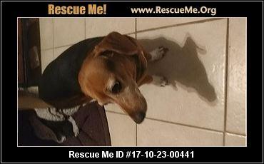 Colorado Dachshund Rescue ― Adoptions ― Rescueme Org