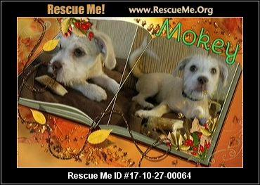 Salty Dog Rescue Maryland