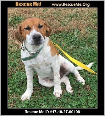 Dog Rescue Orange County Nc