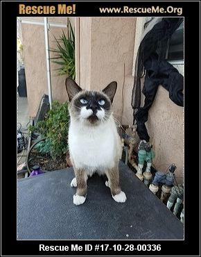 cats bus app