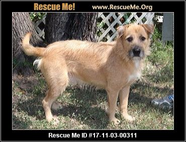 wheaten terrier rescue texas texas soft coated wheaten terrier rescue adoptions 7729