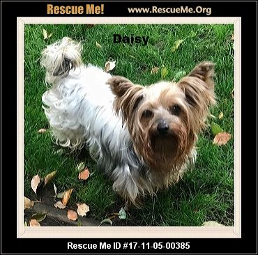 California Yorkie Rescue ― Adoptions ― Rescueme Org