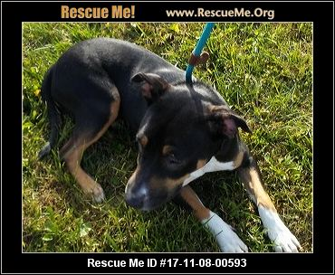 Kentucky Dog Rescue ― Adoptions ― Rescueme Org