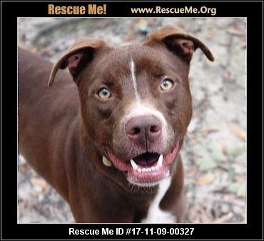 Aiken North Carolina Home For Good Dog Rescue