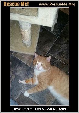 Big Cat Rescue Decatur