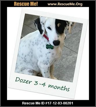 Vermont Dog Rescue Hinesburg
