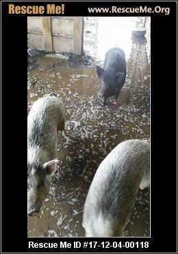 Florida Farm Animal Rescue ― Adoptions ― Rescueme Org