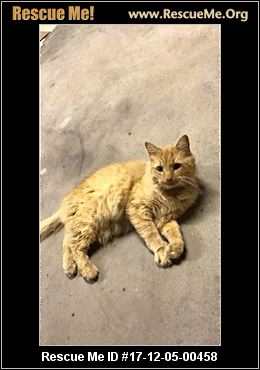 Where To Get A Rescue Cat In Montgomery County