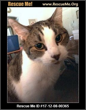 Stray Cat Rescue Jacksonville Florida