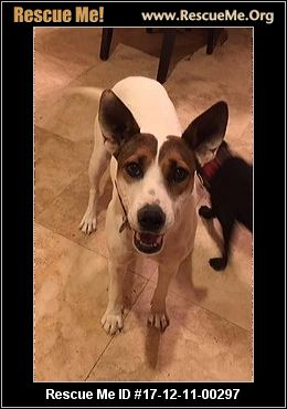Arizona Lab Rescue ― Adoptions ― Rescueme Org