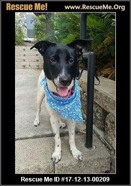Dog Rescue St Clair County Michigan