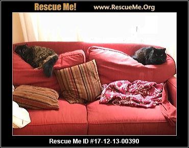Cat Rescue Valdosta Ga
