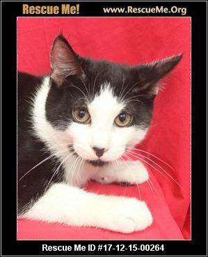 Black Cat Holden White Kitten