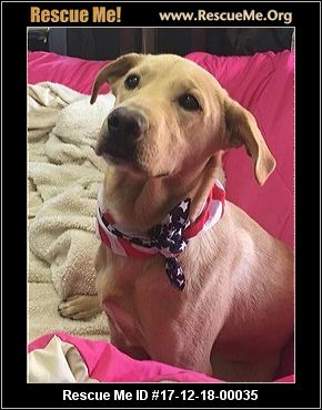Faithful Companions Dog Rescue Nh