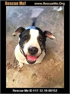 Stylin Pooch Dog Rescue