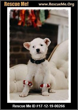 Oklahoma Dog Rescue ― Adoptions ― Rescueme Org