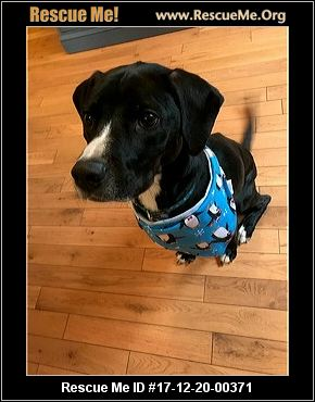Oregon Dog Rescue ADOPTIONS RescueMeOrg - 20 reasons why you should be thankful to have a dog
