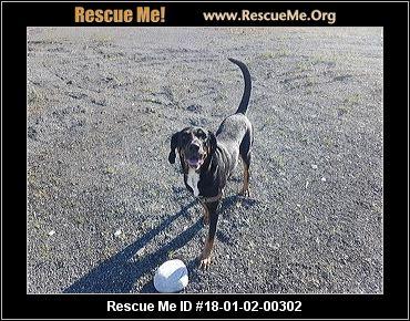 Dog Adoption And Rescue Anchorage Alaska