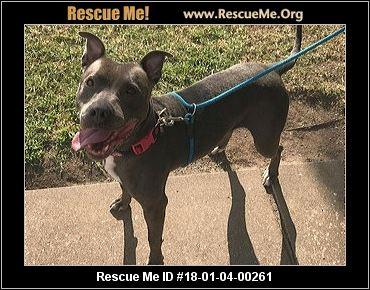 Kansas Pit Bull Rescue ― ADOPTIONS ― RescueMe.Org