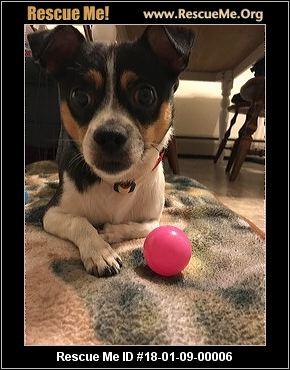 Massachusetts Dog Adoption Quarantine