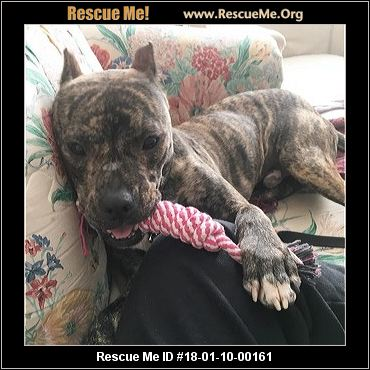 Rescue Dogs Bemidji Mn