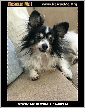 Senior Dog Rescue Colorado Springs
