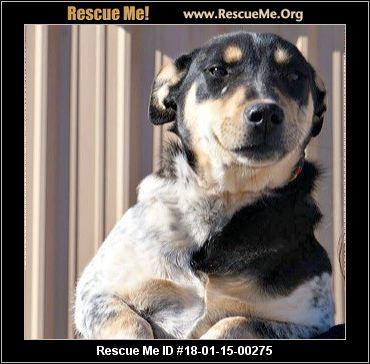 Deaf Dog Rescue Texas