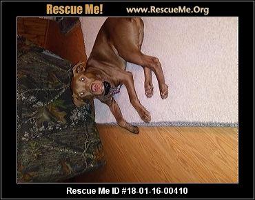 Chapel Hill Tn Dog Rescue