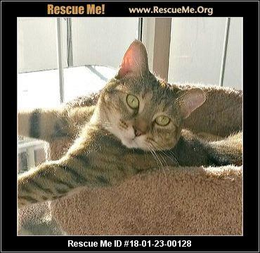 Cat Rescue Bergen County Nj
