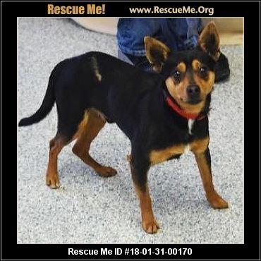 Illinois Corgi Rescue - ADOPTIONS - Rescue Me!