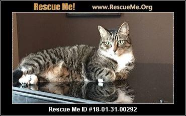 Florida Cat Rescue ― Adoptions ― Rescueme Org