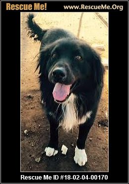 California Border Collie Rescue ― Adoptions ― Rescueme Org