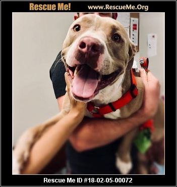 Paws For Help West Palm Beach Florida